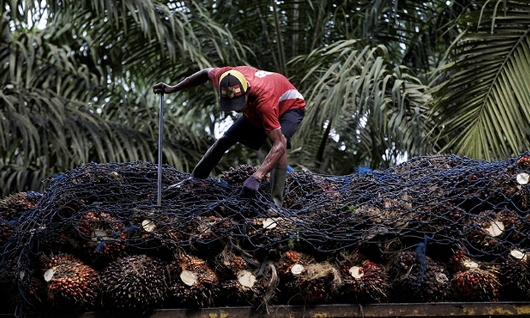 Indonesia Reviews CEPA after EU Proposes Cap on Palm Oil-Based Biofuels