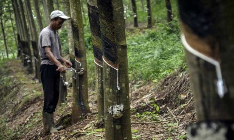 Government to subsidize rubber growers: governor
