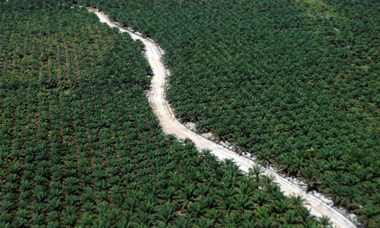Government pins hope on international study favoring palm oil