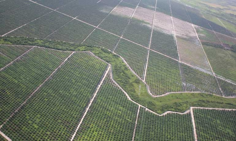In Papua, Forests Offer More Economic Benefits than Palm Oil Plantations, Research Finds