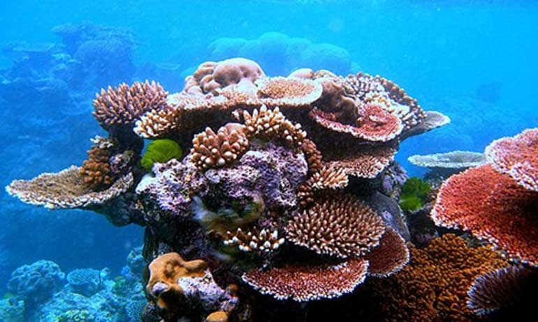Indonesia Sets Aside US$7.5 Million to Build Coral Reef Gardens in Bali