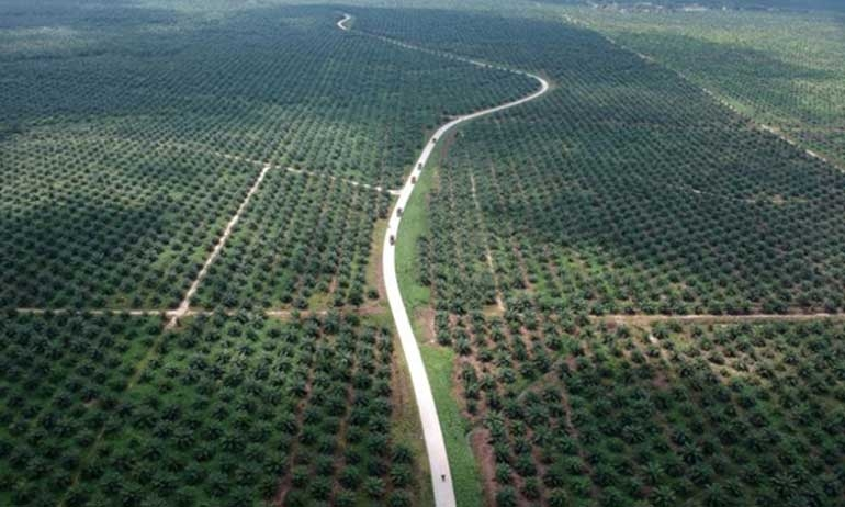 Indonesia threatens to quit Paris climate deal over palm oil